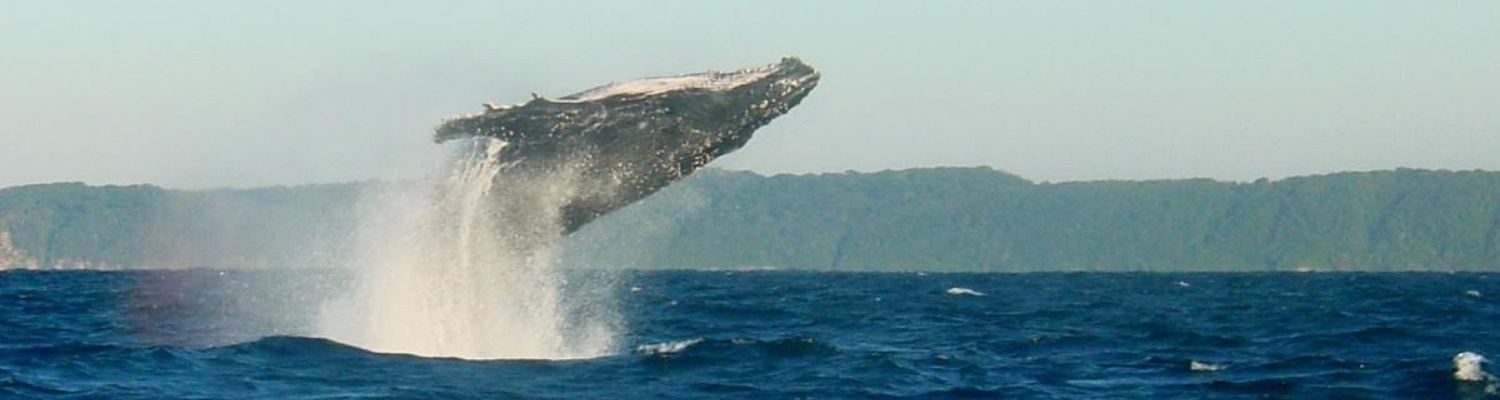 Plett Beacon House, accommodation on the Garden Route,Best Whale watching Land & Boat